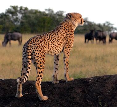 Kruger Explorer